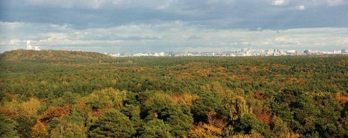 Herbstlicher Wald vor der Skyline von Berlin