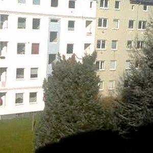Baum mit fehlender Krone zwischen Wohnhäusern