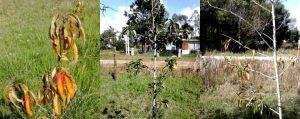 Verschiedene junge Obstbäume auf einer Wiese