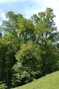 An einem steile Hang steht ein großer Baum