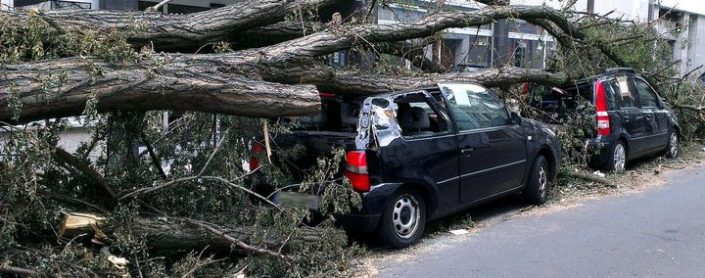 Ein Baum ist auf mehrere Autos gefallen und hat diese beschädigt