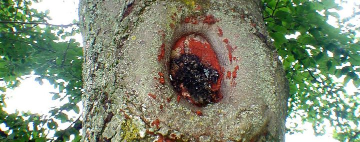 Der Einsatz von Wundverschlussmittel beim Baum- und Obstbaumschnitt
