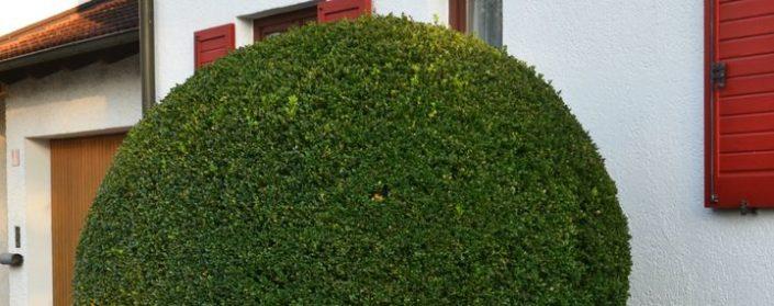 Busch vor einem Haus