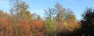 Herbstlich wirkender Wald