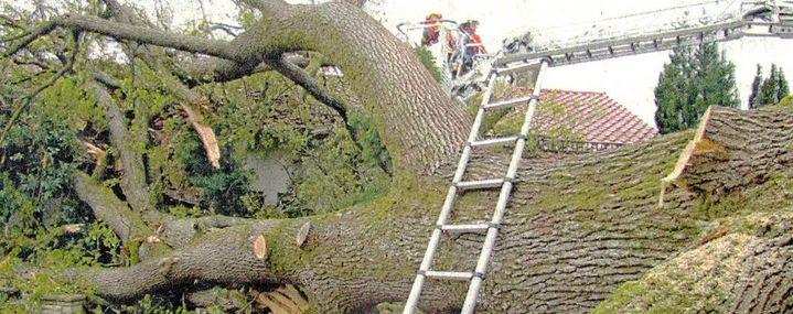 Baum kracht auf Hausdach – einfach so! Einfach so?