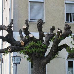 Baum mit abeschnitten Aststummeln
