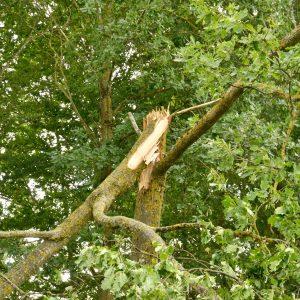 Standhaft im Sturm: Baumpflege durch den Fachmann