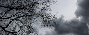 Aufziehender Sturm vor einem Baum