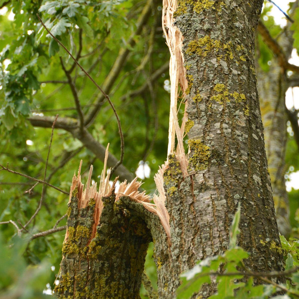Sturmschaden an Bäumen in Gärten beseitigen