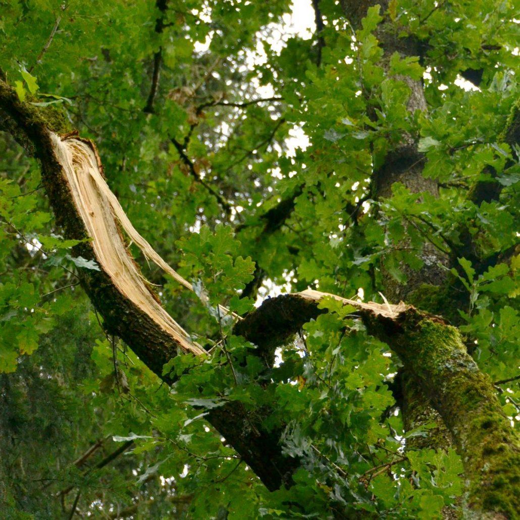 sturmschäden an bäumen in gärten beseitigen - baumpflegeportal