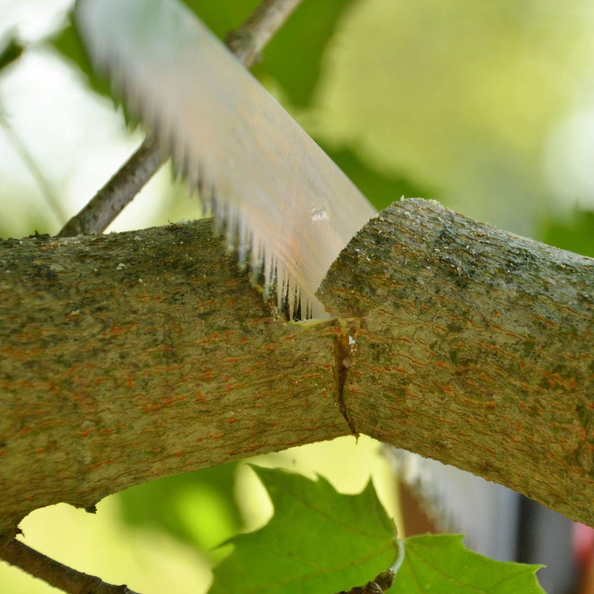 Richtiger Gehölzschnitt: Was bedeutet auf Astring schneiden?