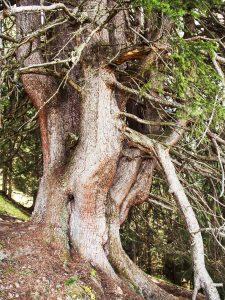 An einem schrägen Hang wächt ein mächtiger Baum