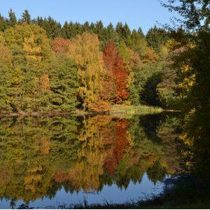 Ein Mischwald im Herbst mit bunten Blättern. Im See spiegelt sich der Wald.