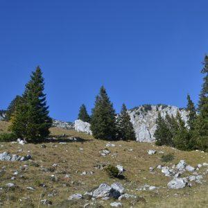 Fichten auf einer Bergkuppe mit Felsen am Boden