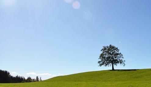 Auf einer Wiese steht einsam auf einem Hügel ein Baum