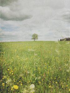 Auf einer Wiese mit vielen Blumen steht ein einsamer Baum