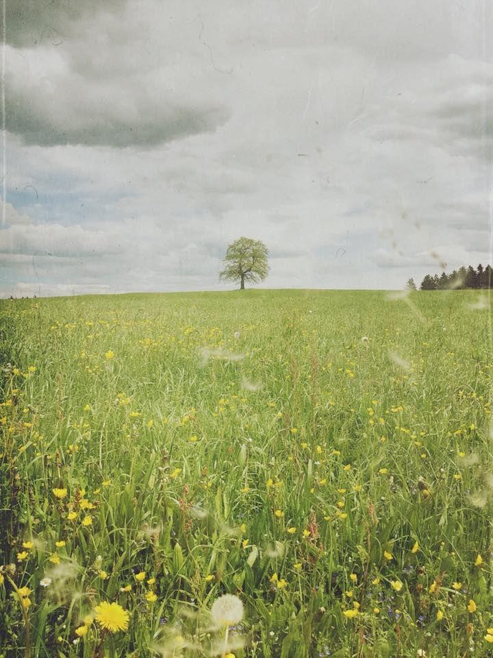 Starke Baumtypen: The Tree of Münsing, Foto: Stefan Pfeil