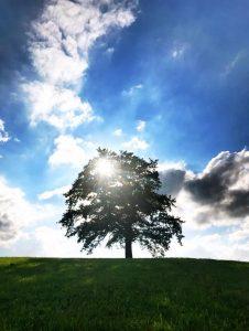 Ein einsamer Baum auf einer Wiese im Gegenlicht