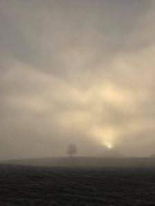 Baum auf einem Feld im Nebel