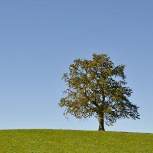 Auf einer grünen Wiese steht ein Baum bei strahlend blauem Himmel