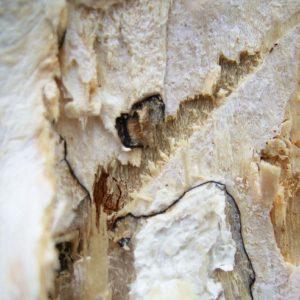 Holz ist mit weißen Geflecht überzogen