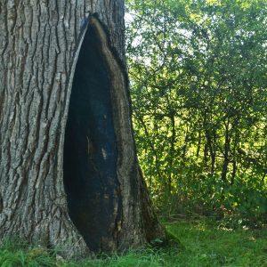Loch in einem Baum ist mit schwarzer Farbe bestrichen