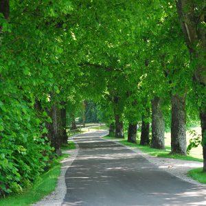 Ein Straße schlängelt sich sanft zwischen Bäumen hindurch