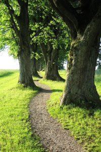 Eine schmaler Weg schlängelt sich zwischen Bäumen hindurch