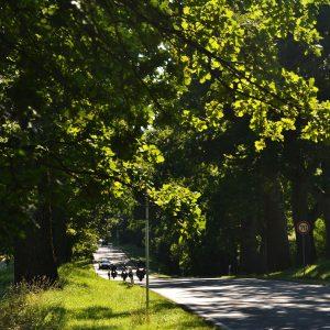 Viel befahrene Straßen zwischen Alleebäume