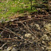 Abgerissene Wurzeln ragen aus dem Erdboden