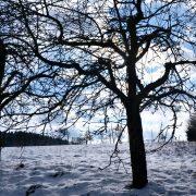 Baum ohne Blätter in einer Schneelandschaft mit blauem Himmel