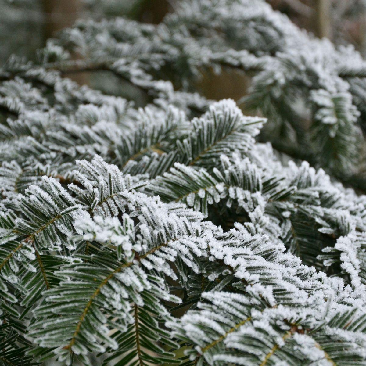 Strategien unserer Bäume im Winter