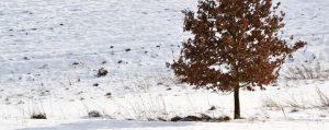 Einsamer Lauubaum auf einem verschneiten Feld