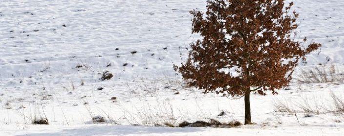 Einsamer Laubaum auf einem verschneiten Feld