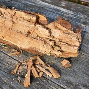Holz mit Braunfäule und würfelartig brechendem Holz auf einem Holztisch