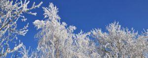 Bäume sind im Winter mit starken Frost und Reif überzogen
