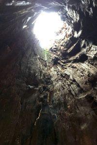 Blick aus einer Stammhöhle nach oben ins Freie.