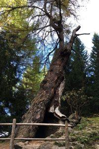 Alter teilweise ausgebrochener Baumstamm mit Höhle