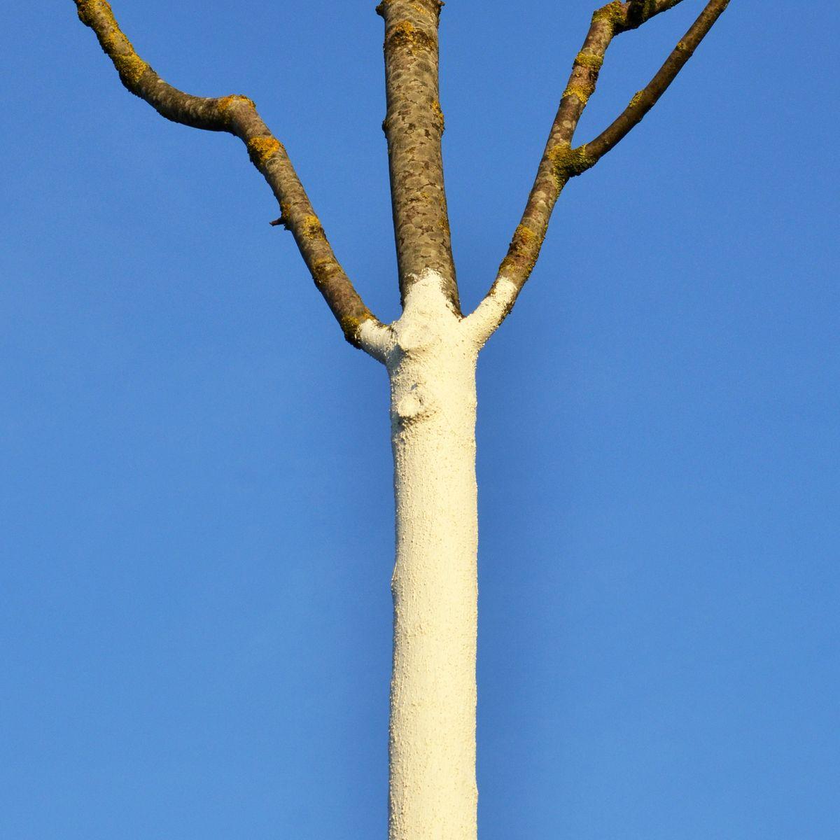 Winterschutz für Bäume und Gehölze im Garten