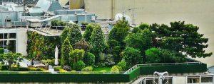 Begrünter Dachgarten mit Bäumen