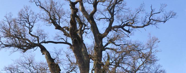 Totholzentfernung: Wie erkenne ich einen Fachmann?