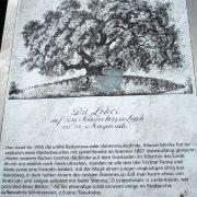 Tafel mit einem Text über die Barbarossa-Linde