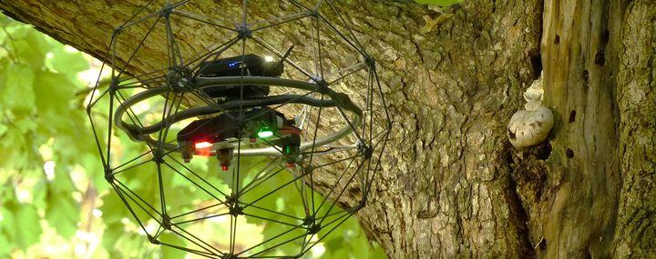 Kleine Drohne mit Schutzgitter in einem Baum