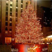 Weihnachtsbaum mit abertausenden bunten Lichtern