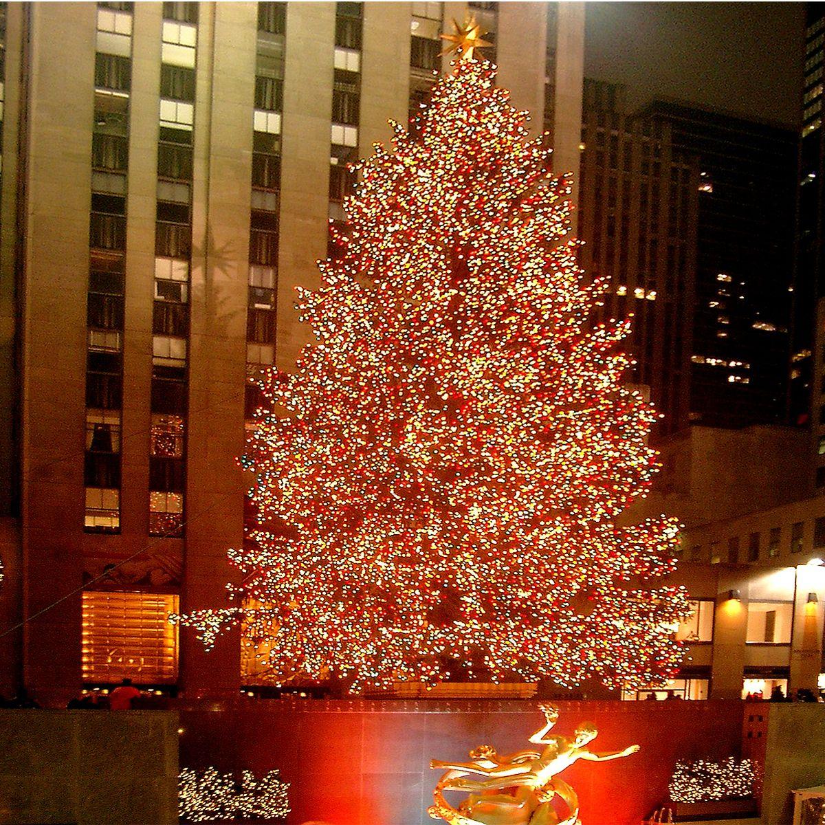 Wo Stand Der Erste Weihnachtsbaum.11 Fakten Und Anekdoten Zum Weihnachtsbaum Baumpflegeportal