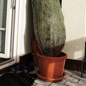 Weihnachtsbaum im Netz in einem Topf stehend
