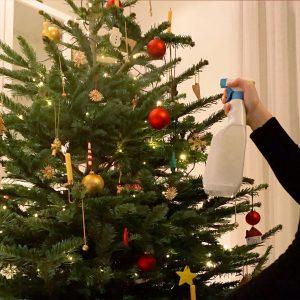Weihnachtsbaum wird mit Wasser besprüht.