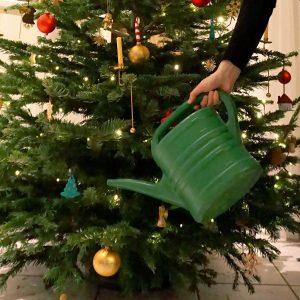 Weihnachtsbaum wird mit einer Gießkanne gegossen.