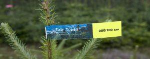 """Spitze eines Weihnachtsbaumes mit """"Fair Trees"""" Bändchen"""