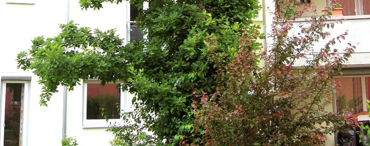 Pflanzung Heckenschnitt Verkehrssicherheit Baumpflegeportal
